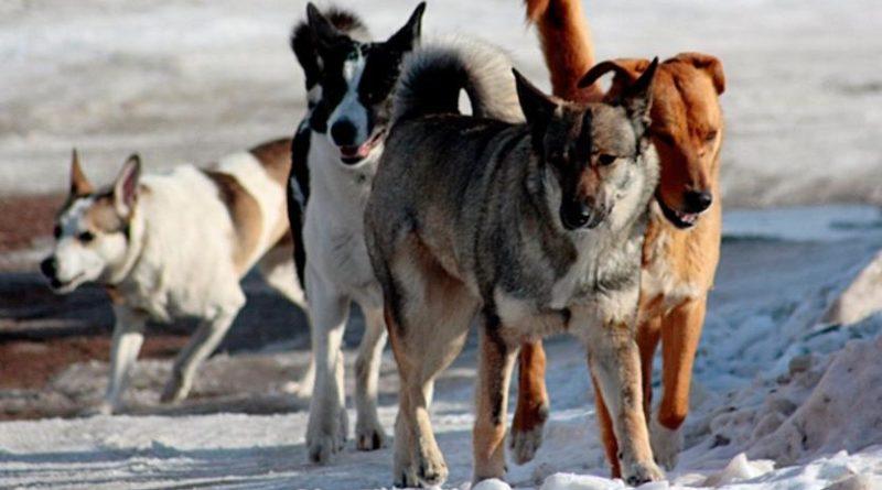 Бесхозяйные собаки