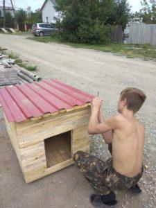 будки для бездомных собак