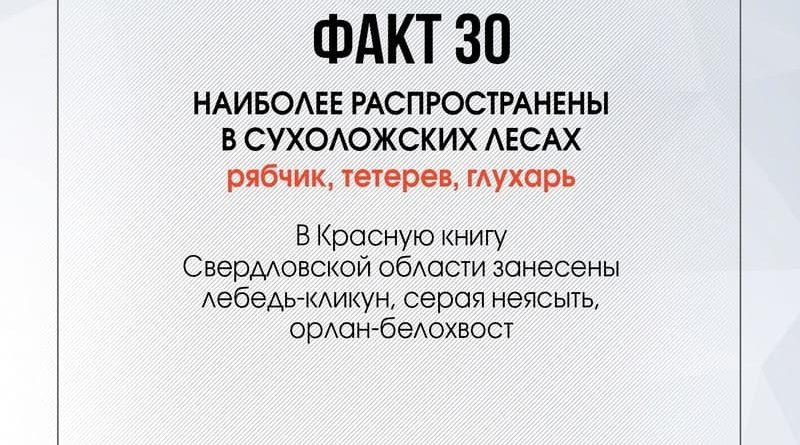 90 фактов о Сухоложье: факт 30