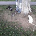 Кормушки для кошек в Сухом Логу