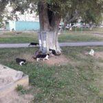 В Сухом Логу кормушки для кошек