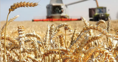 зерновые собраны