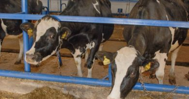 Здоровое стадо – натуральная продукция